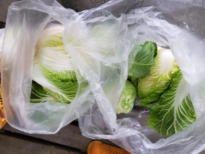 淡路島 野菜